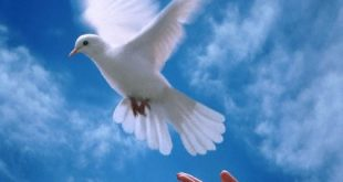 موضوع عن السلام واهميته فى البلاد
