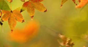صورة موضوع عن فصل الخريف