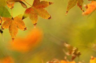 صور موضوع عن فصل الخريف