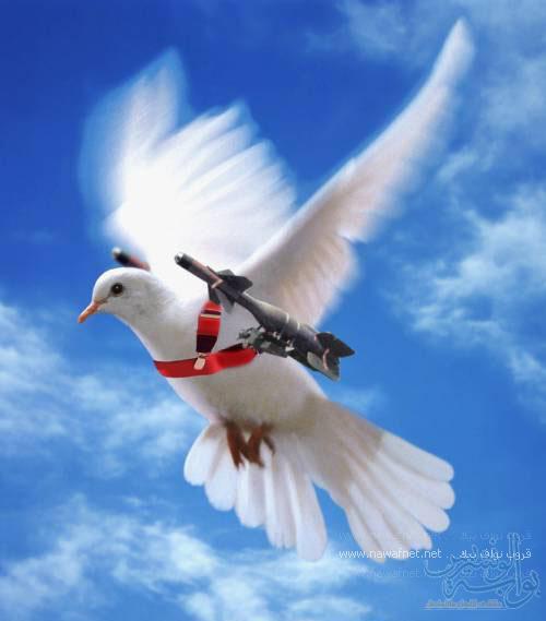 صورة صور عن السلم هنا صورة السلام